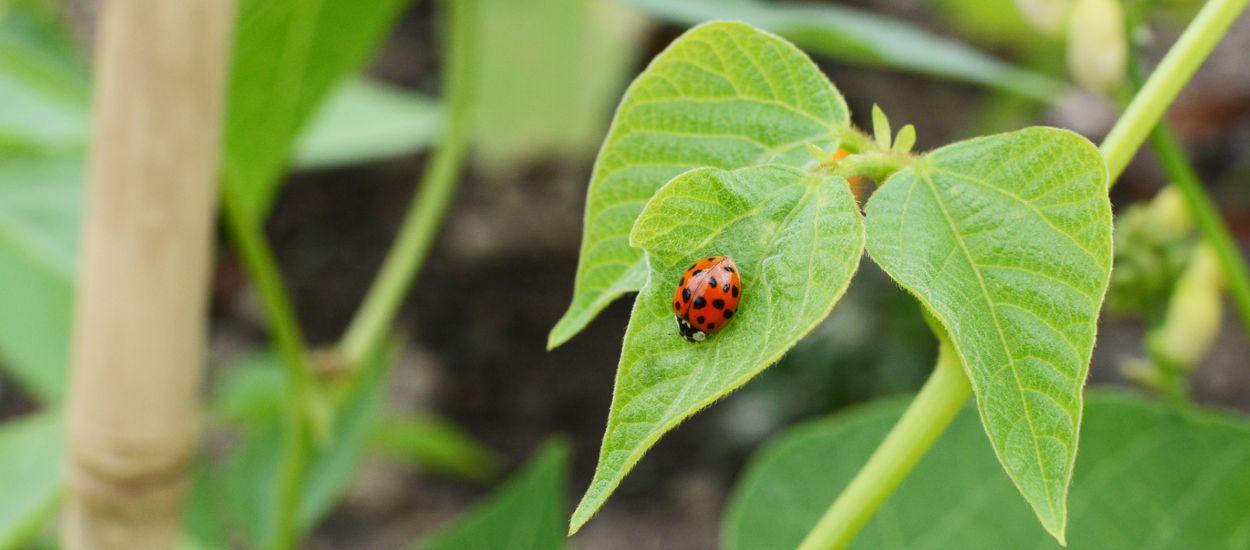 Comment jardiner avec l'aide des insectes ?
