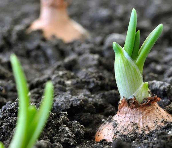 Quels légumes planter pendant le confinement de novembre ?