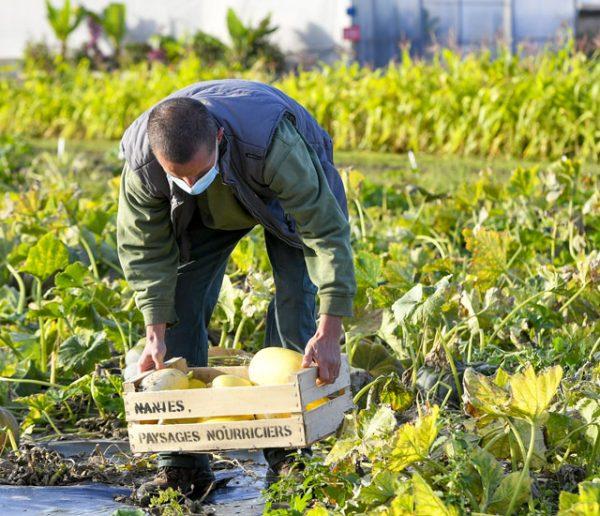 À Nantes, les fleurs de la ville ont été remplacées par des légumes pour faire face à la précarité alimentaire