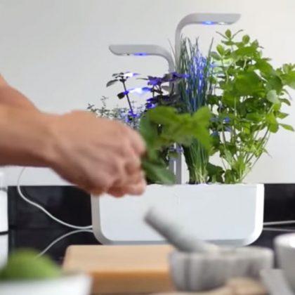 Pas besoin d'avoir la main verte pour cultiver vos légumes avec ce potager d'intérieur