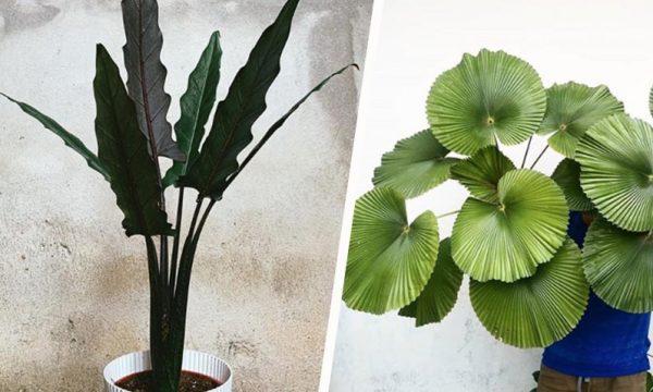 Voici les 6 plantes d'intérieur à adopter pour être tendance cet hiver
