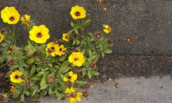 #VégétaliseTonKm : Profitez de votre balade autorisée pour fleurir votre quartier !