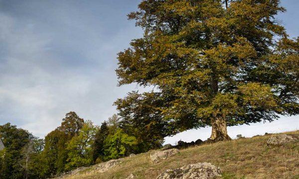 Découvrez les plus beaux arbres de France (et votez pour votre préféré)