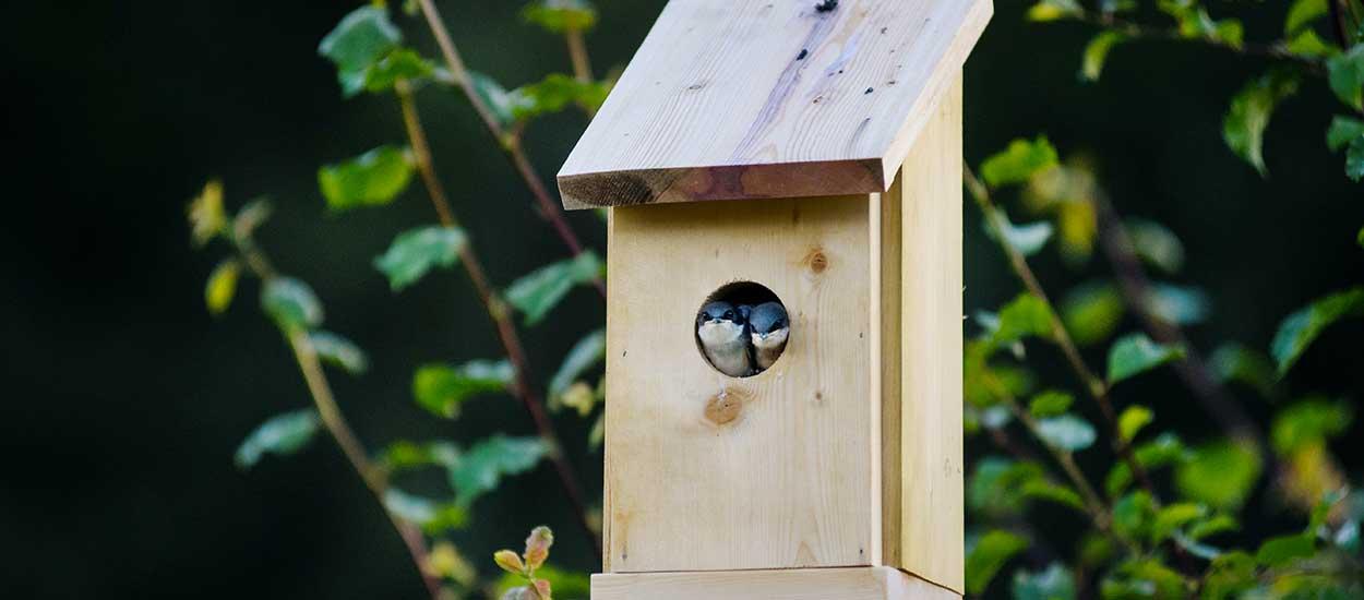 Tout ce que vous devez savoir pour installer correctement un nichoir et vraiment aider les oiseaux