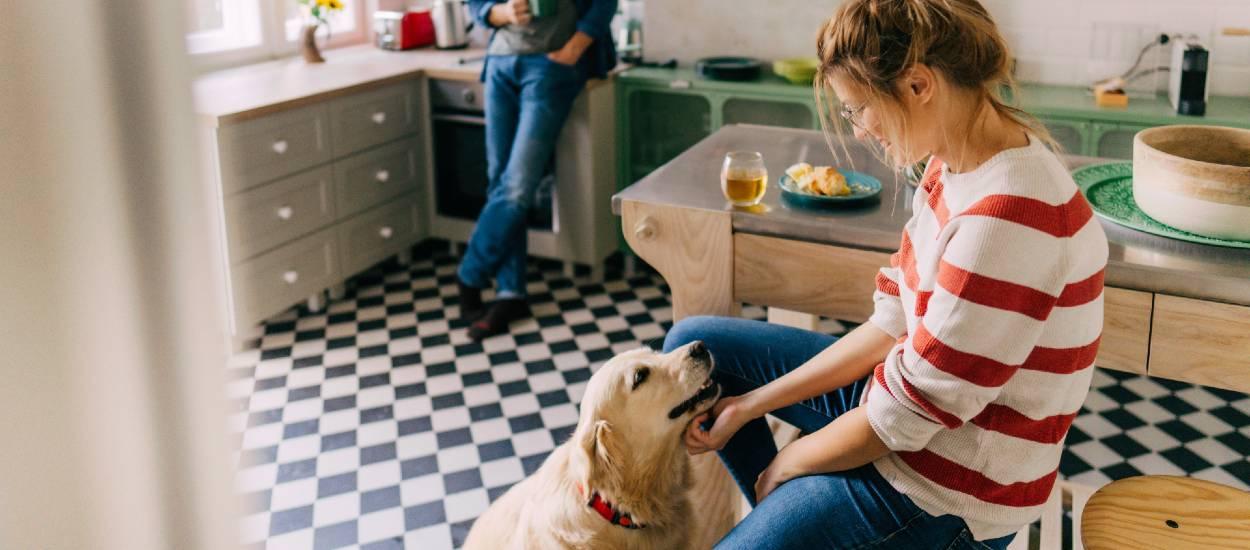 Est-il raisonnable d'adopter un chien quand on habite en appartement ?