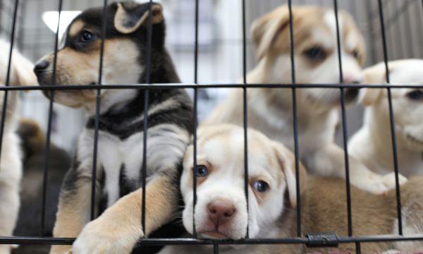 Le gouvernement lance un plan pour lutter contre l'abandon des animaux de compagnie
