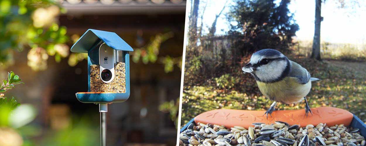 Photographiez les oiseaux de votre jardin grâce à cette mangeoire connectée