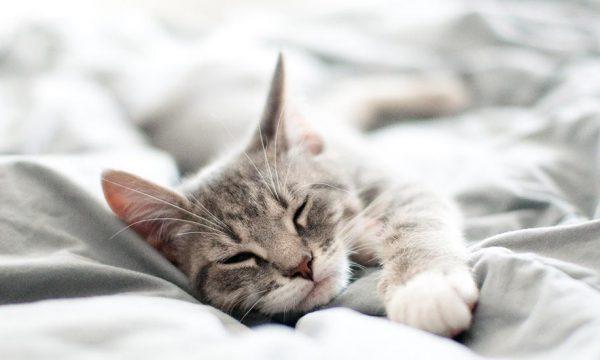 Pourquoi votre chat s'acharne-t-il à dormir dans votre lit ?