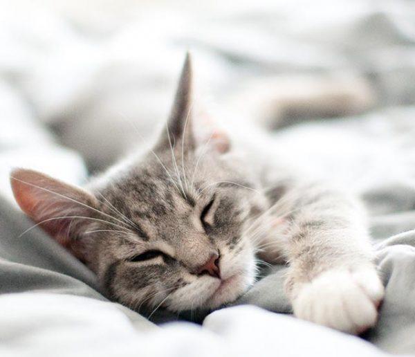 bien-dormir