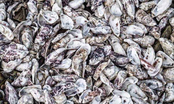 Vous pouvez recycler vos coquilles d'huîtres au jardin, on vous montre comment