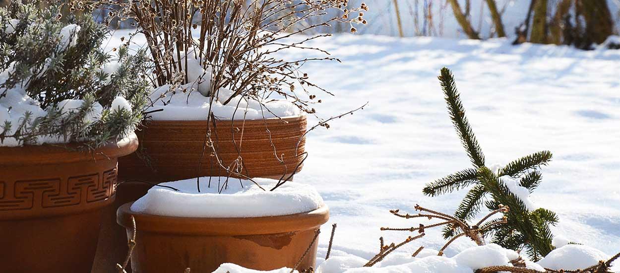 Paillage et plantation : quels sont les travaux à faire en hiver au jardin ?