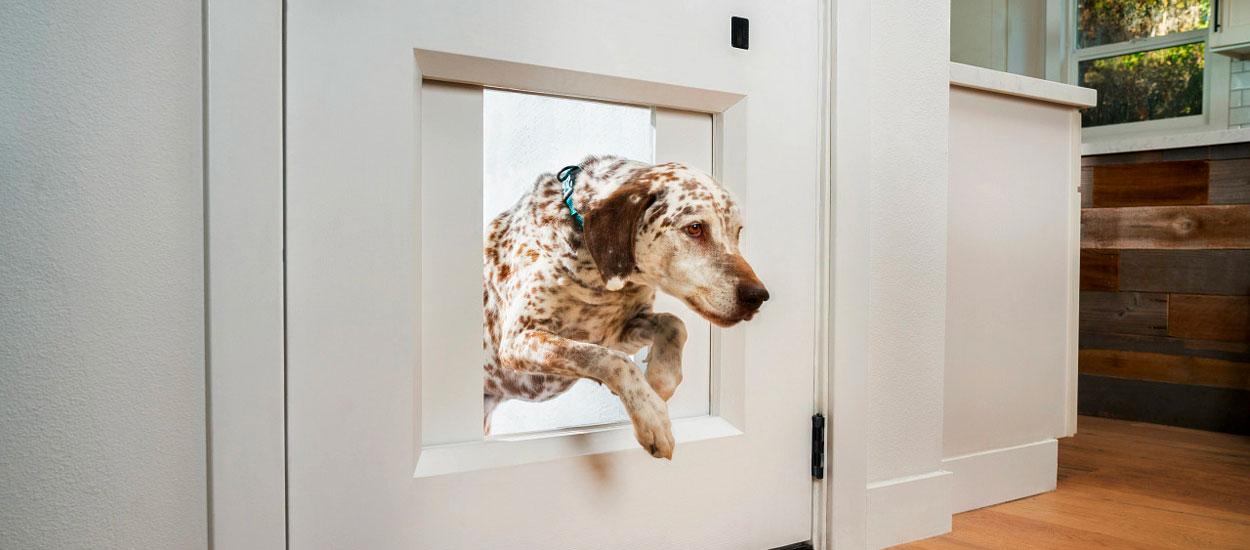 Cette porte intelligente laisse sortir votre chien dans le jardin quand vous êtes absent