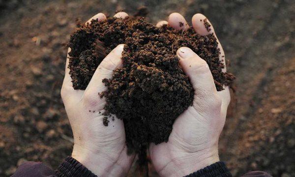 Fumier et compost : quand et comment amender son potager ?