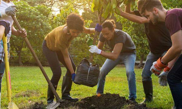 Quel arbre planter dans son jardin ?