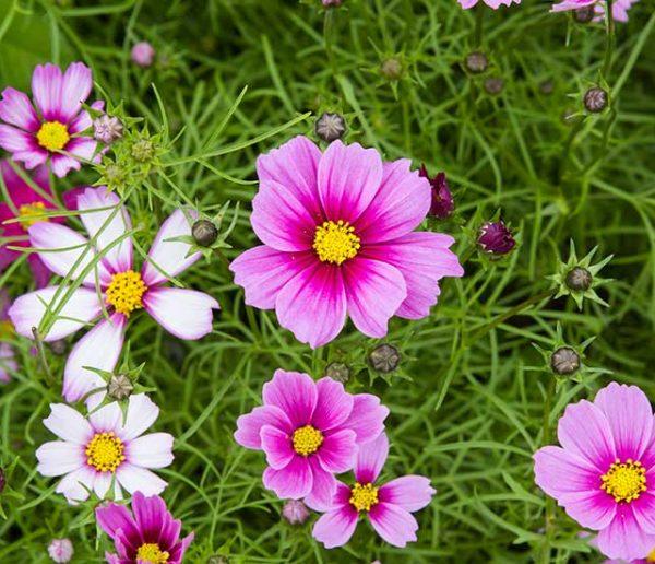 Quelles fleurs planter au mois de mars ?
