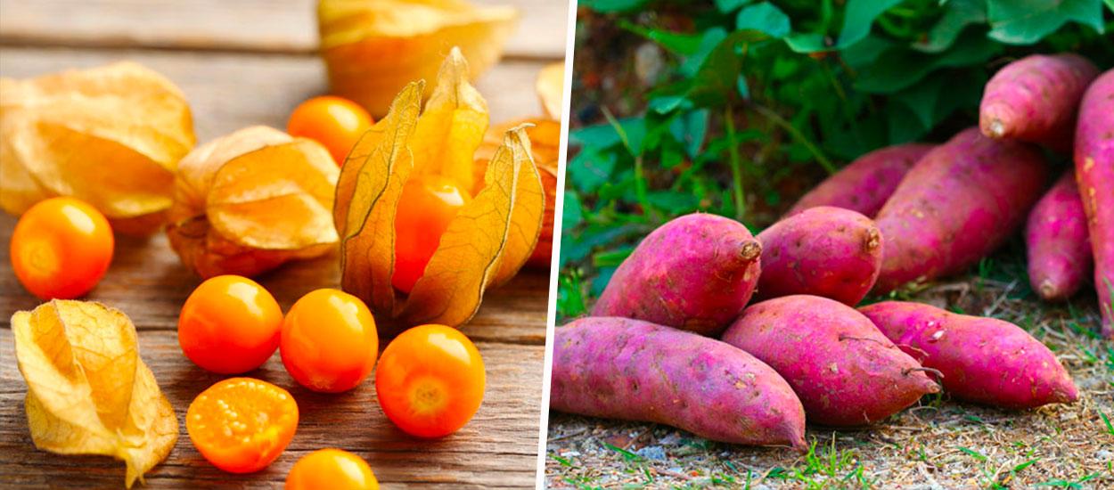 10 plantes exotiques qui résistent à la canicule à tester dans votre potager
