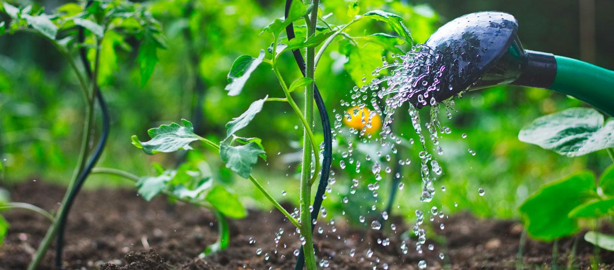 Voici comment préparer son potager au réchauffement climatique et à la sécheresse