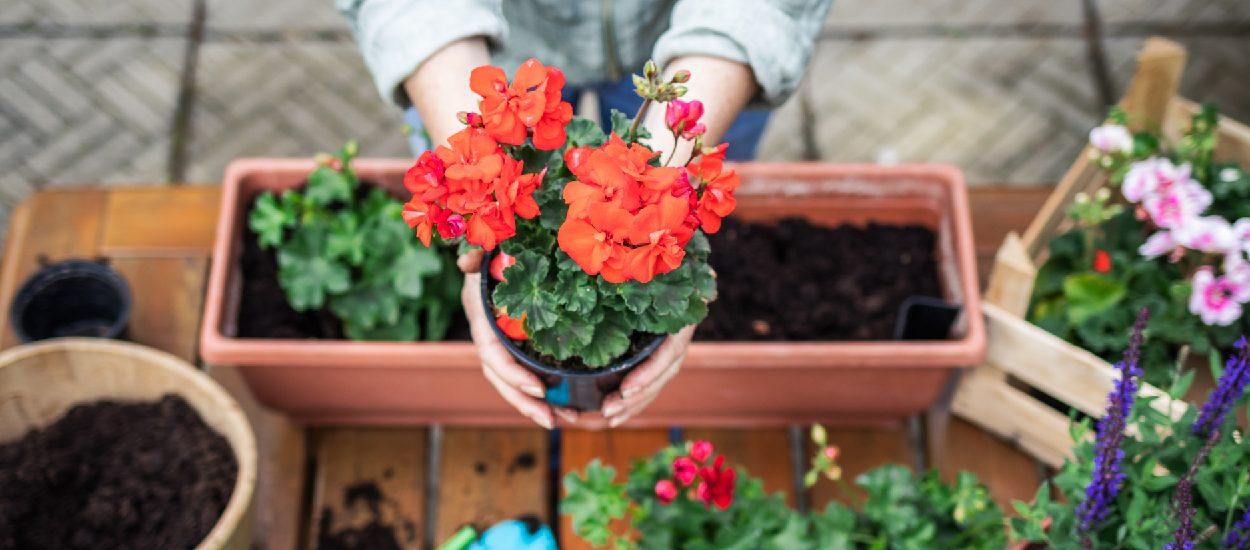 Que planter au printemps dans ma jardinière ?