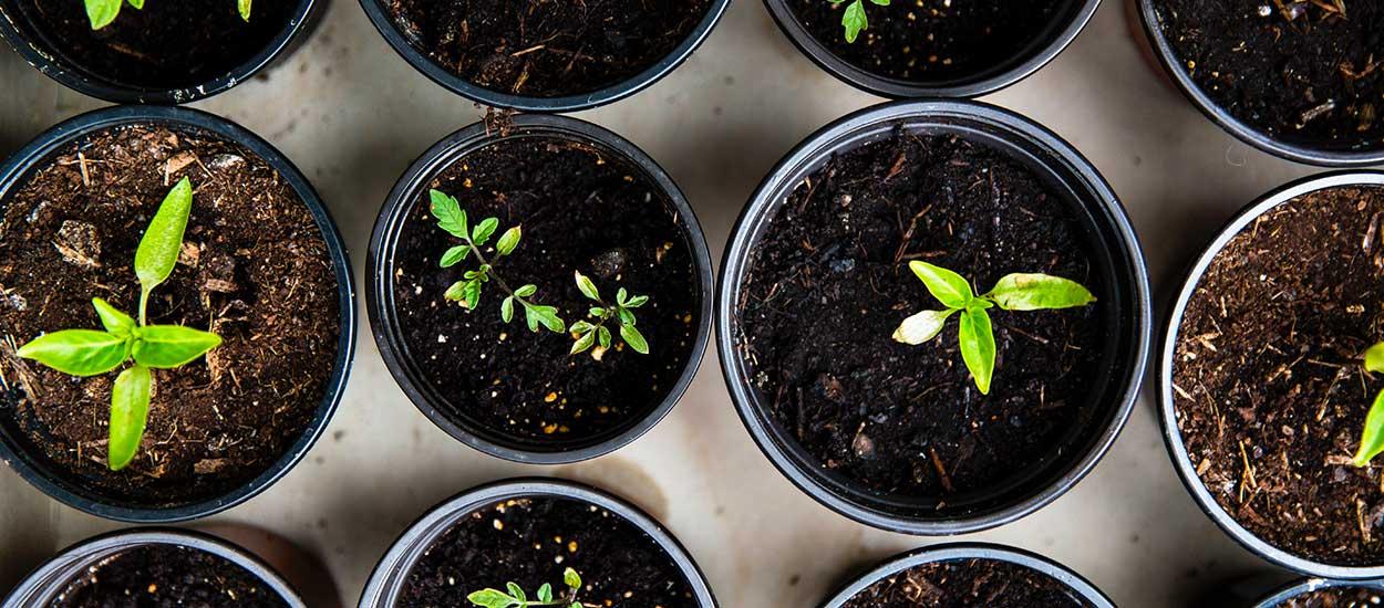 Tout ce qu'il y à savoir pour réussir ses semis au potager