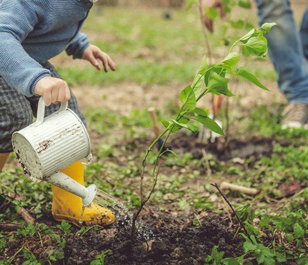 cultiver-son-potager