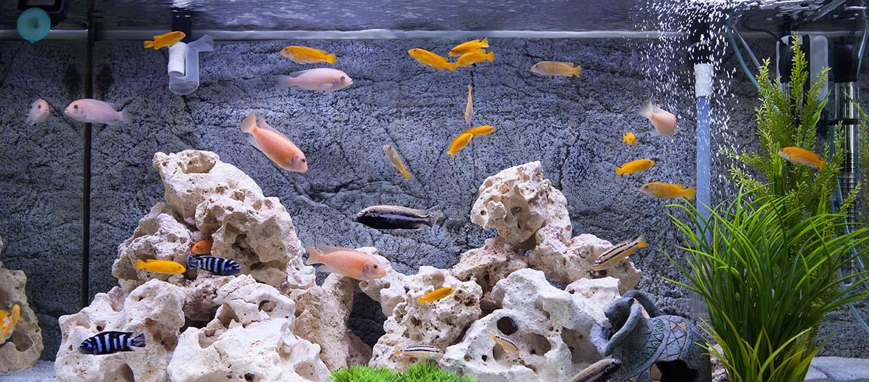 Question pas si bête : peut-on utiliser l'eau des poissons pour arroser ses plantes ?