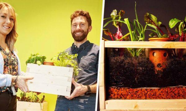 Ces jardinières intègrent un lombricomposteur pour cultiver vos légumes plus facilement
