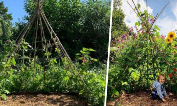 Construisez une cabane en haricots avec vos enfants !