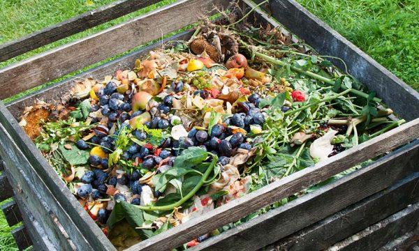 Tout savoir pour réussir votre compost