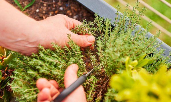 5 techniques pour préparer des potions de plantes et protéger naturellement votre jardin