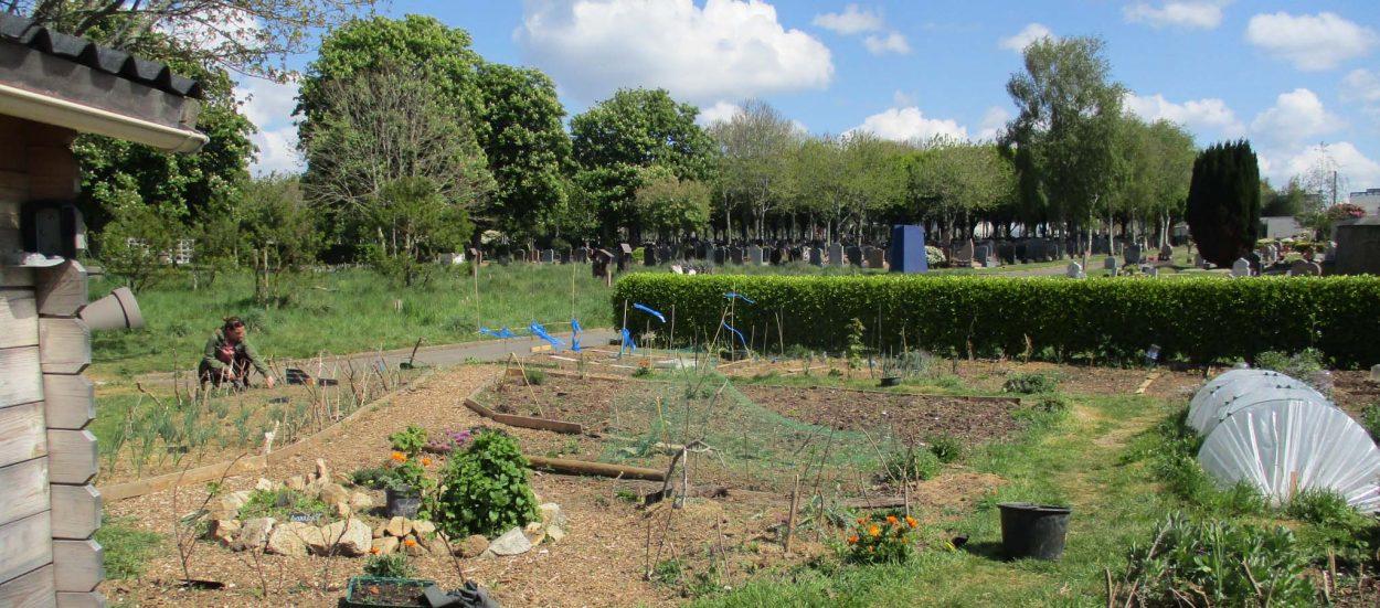 Jardin partagé : ce collectif brestois cultive dans un cimetière !