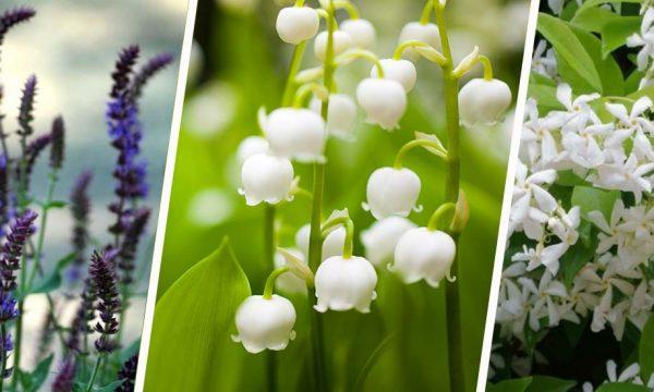 12 plantes odorantes à adopter pour créer un jardin de senteurs