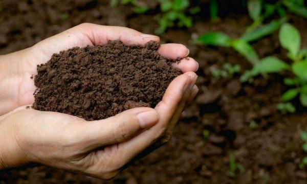 Comment bien utiliser son compost dans son jardin et son potager ?
