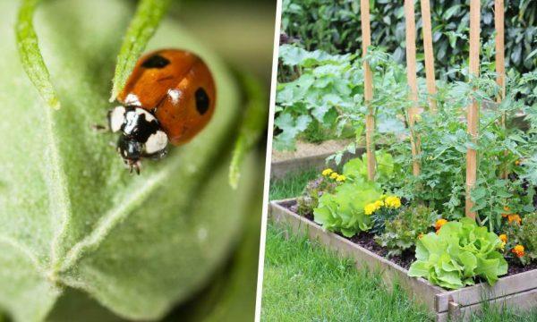 Ces petites bêtes protègent votre potager contre les insectes nuisibles