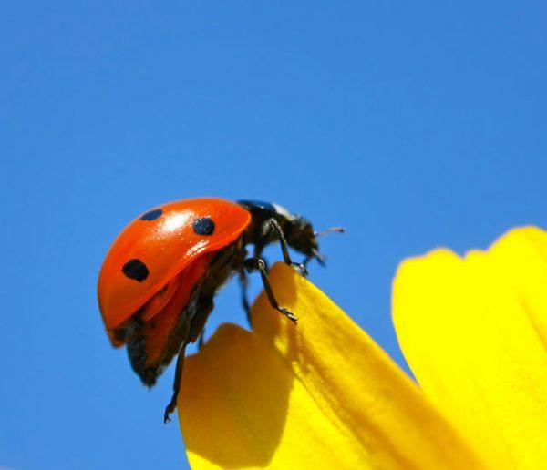 alternatives aux pesticides
