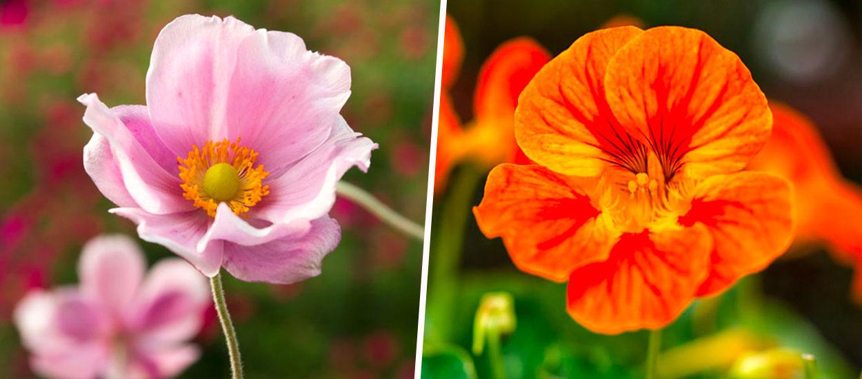 12 fleurs à planter au mois de mai pour embellir le jardin
