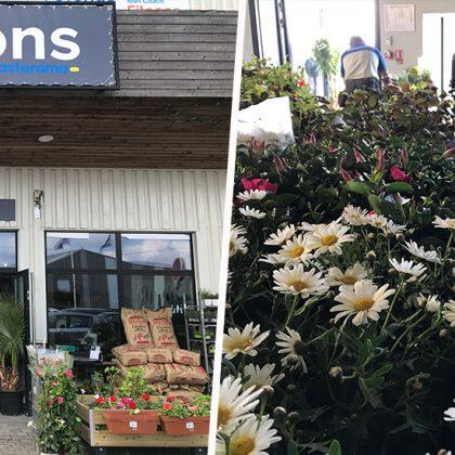 Castorama teste un magasin 100% jardin qui changera son offre en fonction des saisons