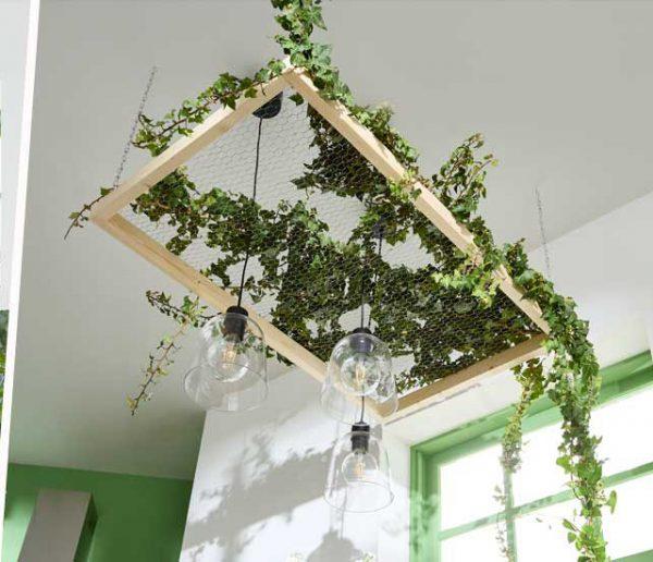 plante-d'intérieur