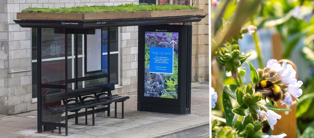 Pour préserver les insectes pollinisateurs, la ville de Leicester fait fleurir le toit de ses abribus