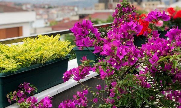 Que planter pour fleurir un balcon exposé au nord et peu ensoleillé ?