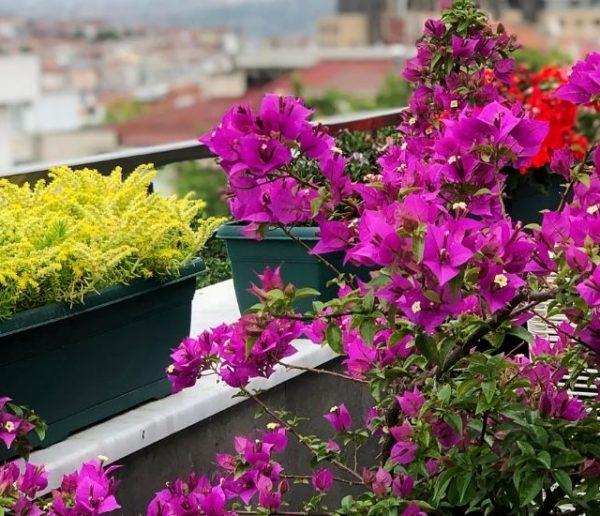 fleurir-son-jardin