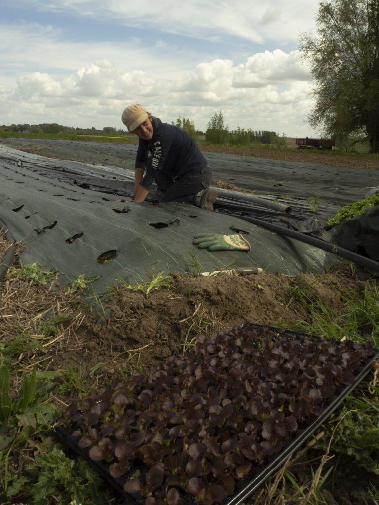 Une femme travaille des légumes sur son exploitation