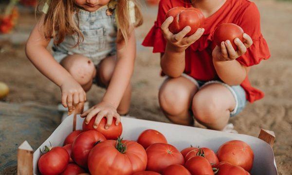 Potager : les 8 légumes très rentables à cultiver au début de l'été !