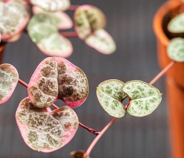 prendre-soin-de-ses-plantes