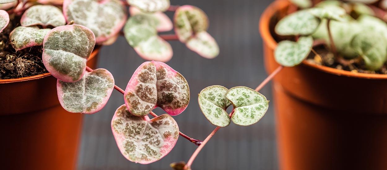 4 mini plantes que l'on a envie d'adopter tout de suite !
