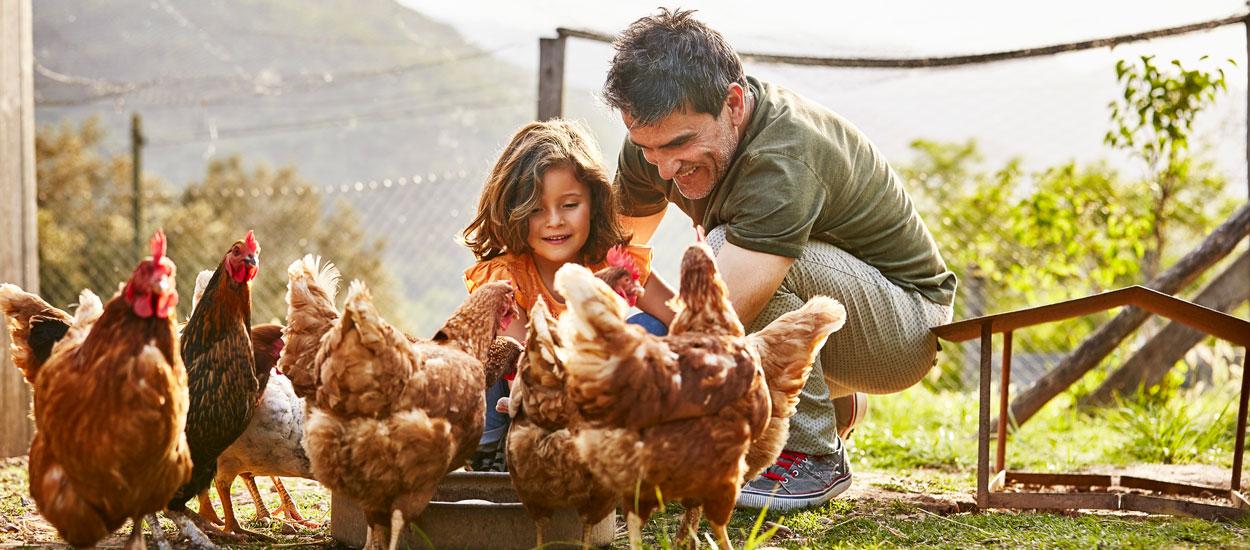 5 preuves que les poules sont les meilleurs animaux de compagnie du monde