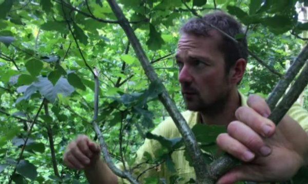 Comment aménager un jardin-forêt pour gagner en autonomie ?