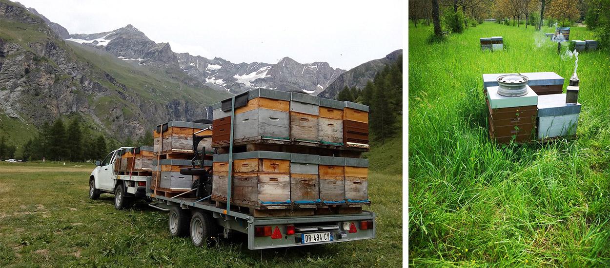 Un apiculteur se bat pour sauver 35 hectares de biodiversité bientôt transformés en bureaux