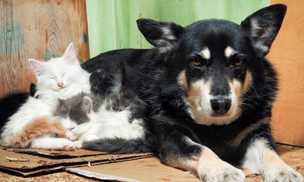 Pour faire face à la hausse des abandons, la SPA propose d'accueillir temporairement des animaux