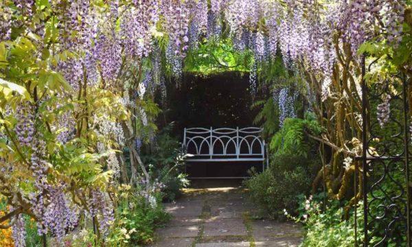 10 plantes grimpantes pour se faire un coin d'ombre au jardin cet été