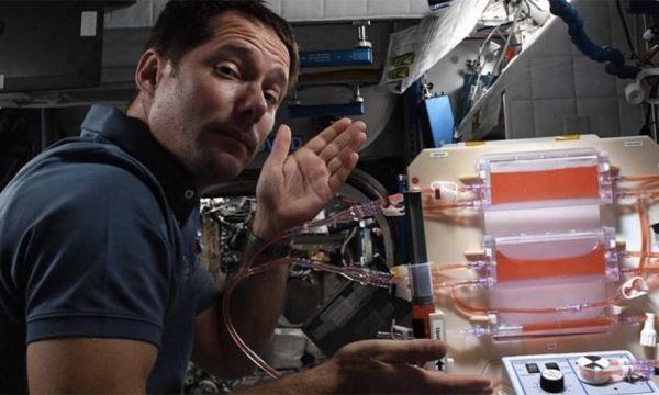 Découvrez comment Thomas Pesquet va faire pousser un potager dans l'espace